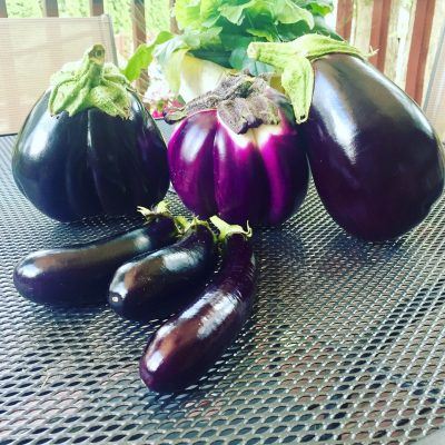 Grow a variety of Eggplant