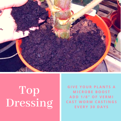 Top Dressing Potted plants with 1/8